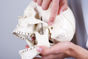 a physiotherapist points to where lock jaw TMD TMJ can occur in human jaw bone
